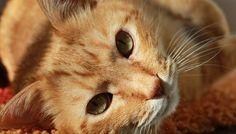 Sokak hayvanları için Bir Kap Yemek Bir Kap Su adı altında internette bir çok…