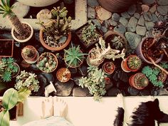 It's like I'm looking at my plants with my border collie pup ha