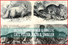 INSTANT DOWNLOAD Wild and Domestic Cats 16x20 and Smaller Late