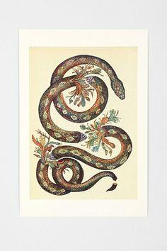 Katie Scott Snake Art Print