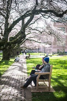 UW Cherry Blossoms | Spring 2014 (Photo by Xuzhe Tong)