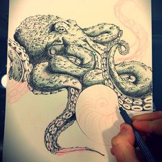 Octopus sketch by a tattoo artist.
