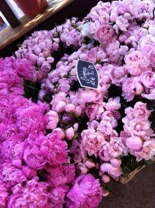 du rose du rose des fleurs