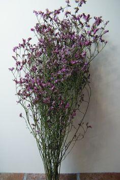 Daisy Gifts Ltd dried sea lavender limonium bunch pink http://www.daisyshop.co.uk £4.99