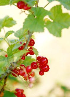 My Sweet Faery: Escapade nature (1) : Mousse au chocolat blanc et ...