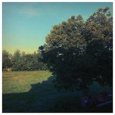 Apro la finestra ad una vita che ora sa di stantio, Stiro le labbra ferendo il viso con un sorriso forzato, Rimbocco le maniche a sentire la temperatura pungente di autunno, Progetto fattibili nuovi orizzonti.