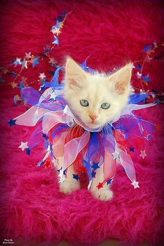 Red, White & Blue Kitty