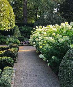 'Limelight' Hydrangeas: An Autumn Gift from the Garden - Private Newport