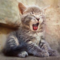 Good morning yawn