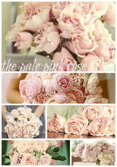 Pale pink Roses / wedding inspiration