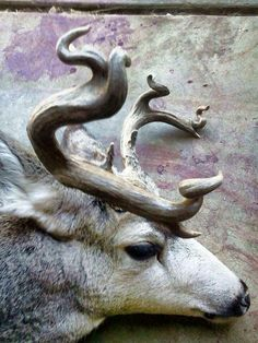 Saw this and thought of everyone who ever wanted a weird racked deer