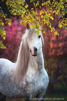 (89) Horses & Freedom - Photos