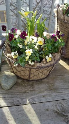 """Hottest Absolutely Free Pansies ideas Ideas Pansies include the bright colored roses with """"faces."""" A new cool-weather preferred, pansies are fantast Spring Plants, Spring Garden, Winter Garden, Spring Flowers, Rare Flowers, Pretty Flowers, Tomato Garden, Deco Floral, Climbing Roses"""