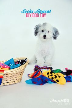 3 easy and engaging DIY dog toys