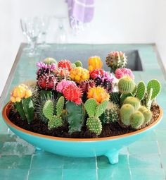 beautiful cactus centrepiece