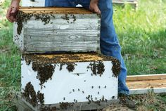 Do you know which #beehive type is the best for your #beekeeping needs? http://www.beeculture.com/ask-phil-3/