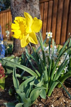 Hello Spring, we missed your green grass, warm sunshine and beautiful flowers.