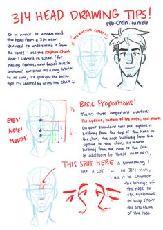 Hey! So kowaii–desu recently requested a ¾ head drawing tutorial and Tumblr kept botching the quality when I tried to respond to her ask, so here it is as a separate post in MUCH higher resolution! Again, I hope it's not too convoluted and is able to...