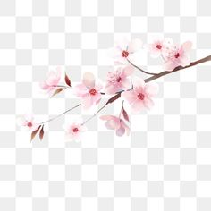 The illustrations of japanese cherry blossoms PNG and PSD Cherry Blossom Vector, Cherry Blossom Petals, Frame Floral, Spring Plants, Cute Clipart, Flower Branch, Japanese Flowers, Happy Chinese New Year, Love Illustration