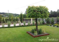 Moja codzienność - ogród Oli - strona 1502 - Forum ogrodnicze - Ogrodowisko