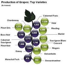 Production_of_grapes-varieties_2010.JPG 500×500 pixels