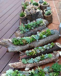 déco bois flotté et plantes succulentes avec des troncs d'arbre à poser sur le sol de la terrasse
