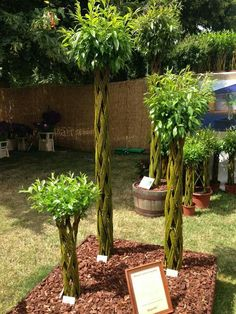 Innovative braided Willows from Baugaarden at RHS Hampton Court Flower Show 2014