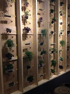 Plants in soda bottles on wall - cool wall decoration