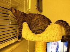 Cat in the blinds...omg haha
