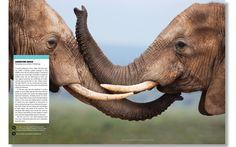 'World Wildlife Magazine' — Pentagram