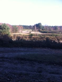 View from a bench in the Reeksche Heide, Netherlands