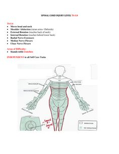 Spinal Cord Injuries T6-L4