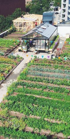 ØsterGRO - a 600 m2 organic rooftop garden, five floors above an old car auction – it sounds like a scene from New York, but it is totally Copenhagen. #urbanfarmingrooftop #rooftopgardens #greenroof