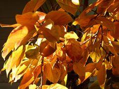 autumn leaves - Hledat Googlem