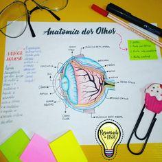 O olho humano (globo ocular) é um dos elementos mais incríveis do corpo humano.Como todo aparelho sensorial, o da visão consta de três partes: *parte periférica (receptor externo), representada pelo globo ocular e anexos; *parte intermediária, ou transmissora, o nervo óptico, segundo par craniano; *parte central (receptor interno), no córtex do cérebro, região occipital. Med Student, Student Studying, Student Life, Medicine Notes, Medicine Student, Science Notes, Study Organization, Study Techniques, Medical Anatomy