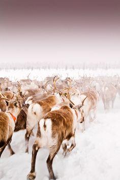 Lapland photographs - Gary Latham