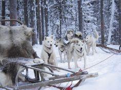 Husky sleigh ride