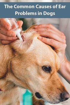 dog ear problems - 235×353
