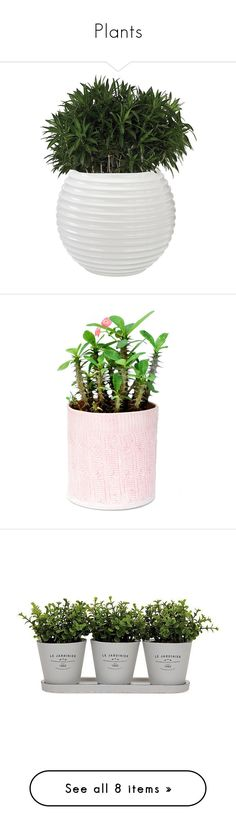"""""""Plants"""" by andreiasilva07 ❤ liked on Polyvore featuring home, outdoors, outdoor decor, plants, fillers, fillers - plants, add-ons, decor, fiberglass planters and flowers"""