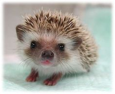 Call me crazy but I want one! How cute!