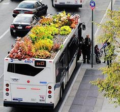 Living Rooftop Garden by Bus Roots