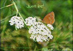 Just be! butterfly