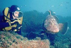 Diving. Hotel Aiguablava, Begur, Cala Fornells, Costa Brava, Luxury Hotels