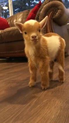 Baby Farm Animals, Baby Animals Super Cute, Cute Wild Animals, Baby Animals Pictures, Cute Baby Dogs, Cute Animal Videos, Cute Little Animals, Cute Animal Pictures, Cute Funny Animals