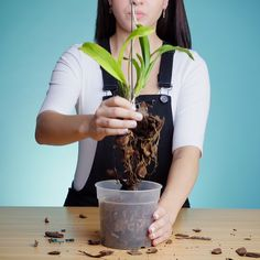 Best 10 Learn how to make your own Kokedama with our how to steps Kokedama DIYproject GardenProject GardenGateMagazine – SkillOfKing. Indoor Orchids, Orchids Garden, Orchid Plants, Garden Plants, Garden Web, Balcony Garden, Growing Orchids, Growing Plants, Home Vegetable Garden