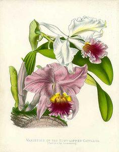 Ruby Mines: In the garden with Carolina Herrera's Botanicals...
