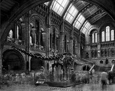 Matthew Pillsbury, Diplodocus #2, Natural History Museum, London, 2007