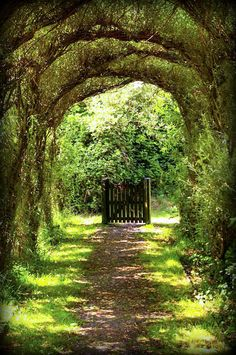 Gorgeous tree tunnel and intriguing gate - Nature's Archway The Secret Garden, Secret Gardens, Hidden Garden, Modern Landscaping, Garden Landscaping, Landscaping Ideas, Walkway Garden, Hydrangea Landscaping, Tree Tunnel