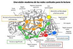 http://blogs.iadb.org/education/files/2014/03/Brain-Spanish.jpg