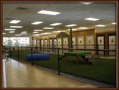 Doggy Daycare at Spa Paw & Tail